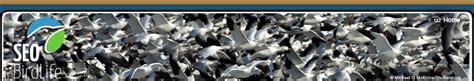 Seguimiento de Aves SEO/BirdLife