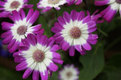 Selección de plantas ornamentales de bajo mantenimiento