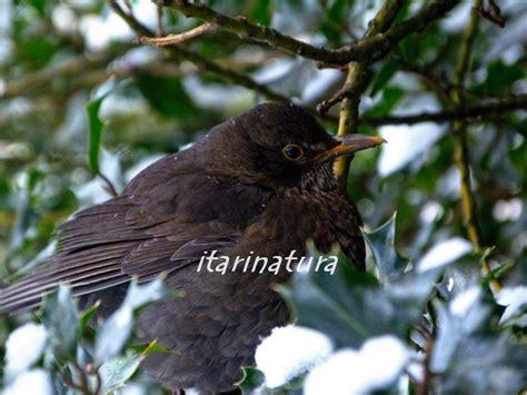 Selva de Irati: El crudo invierno...