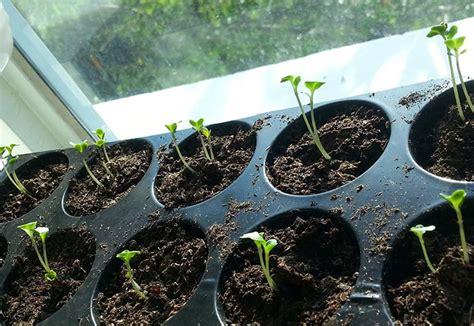 Sementes: as melhores maneiras de germinar e ter sucesso ...