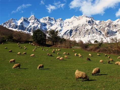 Senderismo en Picos de Europa   Senderismo y Excursiones