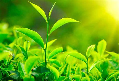 Sentidos de las plantas