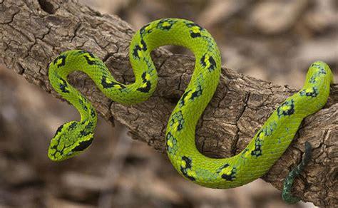 Serpientes venenosas: toda la información que necesitas de ...