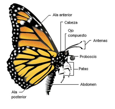SERVICIO COMUNITARIO EN ENTOMOLOGIA FORENSE: Mariposas de ...