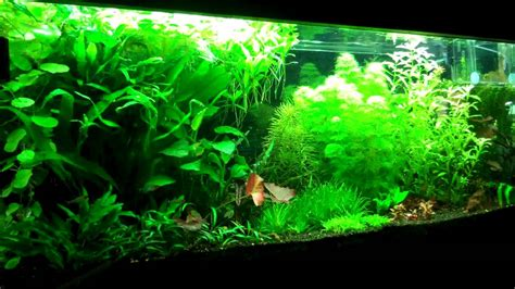 Setting up your first Planted Aquarium Part 2 Substrate ...