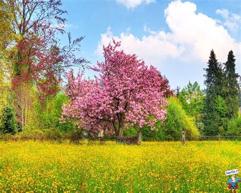 Sfondi Primavera • Sfondi in alta definizione (HD)