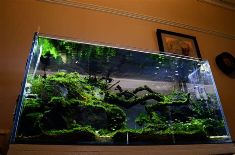 Share your shrimp tank scape - The Planted Tank Forum