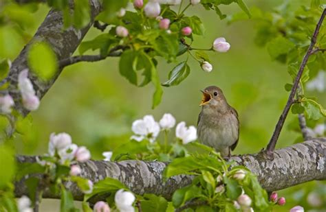 Shazam for birds: new app Warblr can identify songs of 220 ...