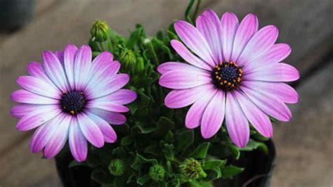 Siete plantas de primavera que necesitan mucho sol | Día a Día