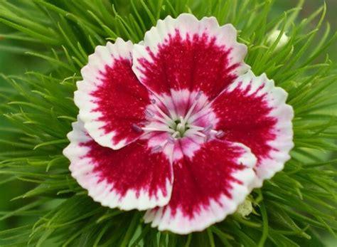 SIGNIFICADO DE LAS FLORES: Toda la información de flores