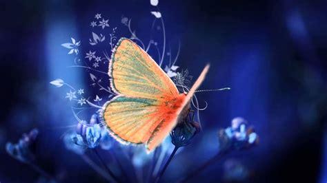 Significado de soñar con mariposas   YouTube
