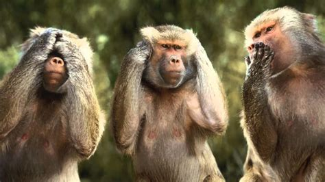 Significado de soñar con monos   YouTube
