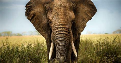 Significados de los elefantes :: Imágenes y fotos