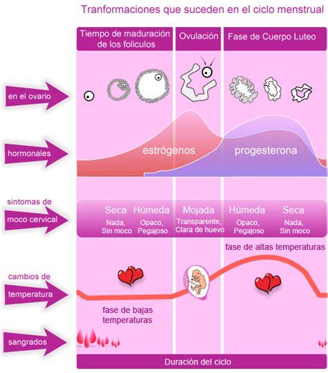 Signos de fertilidad en las fases del ciclo. - 28dias