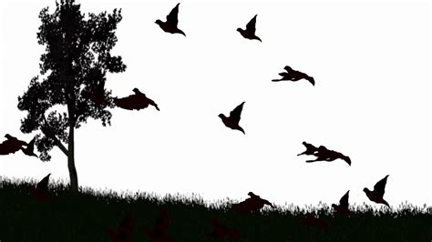 Silhouette of birds flying over lanndscape black and white ...