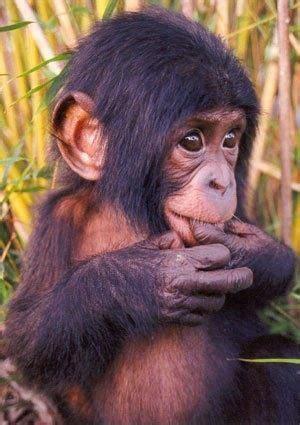 simio :3   Too Cute.   Pinterest   Animales, Reino animal ...