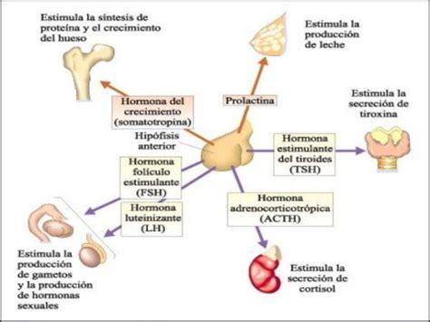 Síndrome de ovarios poliquísticos, SOP   Blogmujeres.com
