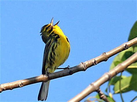 singing bird « MissyFitty.com