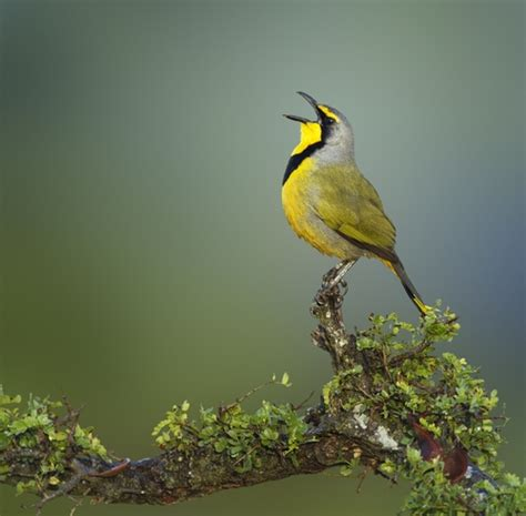 Singing birds can change our mood | Cityvisitor