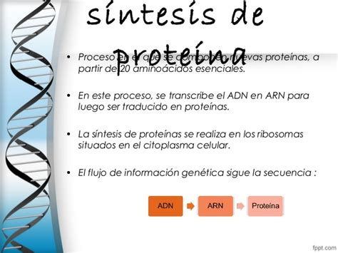 Sintesis de proteinas final