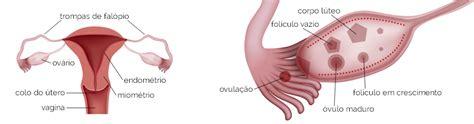 Sintomas, Sinais e Tratamento | Câncer de Ovário