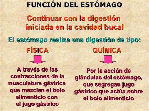 Sistema digestivo abdominal 1ª P