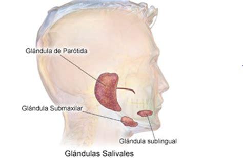 Sistema Digestivo y Urinario: PARTES Y FUNCIONES DEL ...
