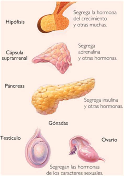Sistema endocrino - EcuRed