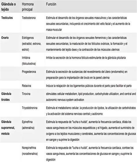 Sistema endocrino: glándulas y hormonas   funciones e historia