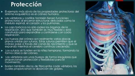 Sistema esqueletico 1111