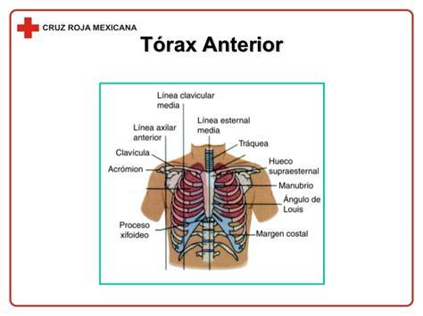 Sistema Musculo Esqueletico