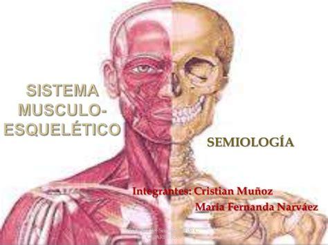 Sistema musculo esquelético