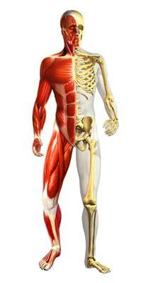 Sistema Músculo Esquelético: Relación entre obesidad y ...
