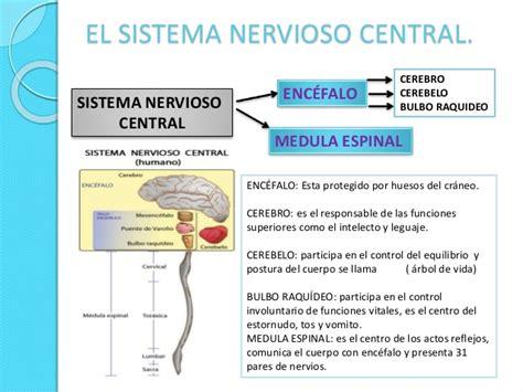 Sistema nervioso biologia y conducta psicologia