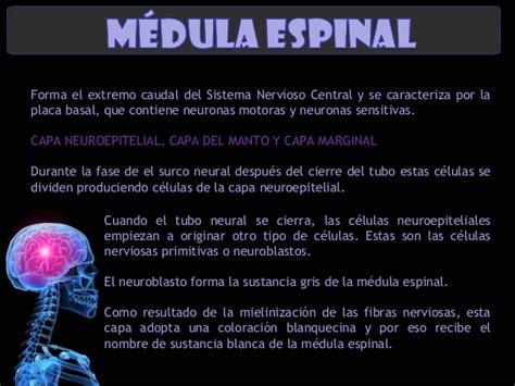 Sistema Nervioso Central, Embriología (Langman)