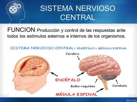 Sistema Nervioso Central - ppt video online descargar
