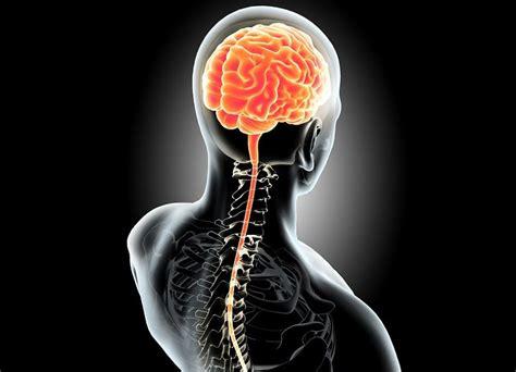 Sistema Nervioso Central (SNC): Estructura, Funciones y ...