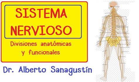 SISTEMA NERVIOSO explicado FÁCIL: anatomía y fisiología ...