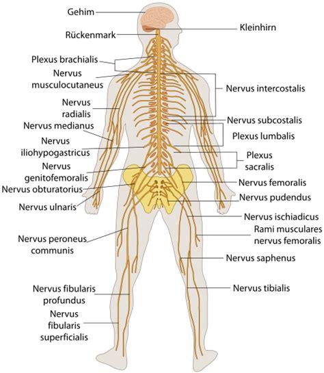 Sistema Nervioso Humano explicado fácil | Dr. Alberto ...