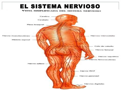 Sistema nervioso nuevo 801 y 802