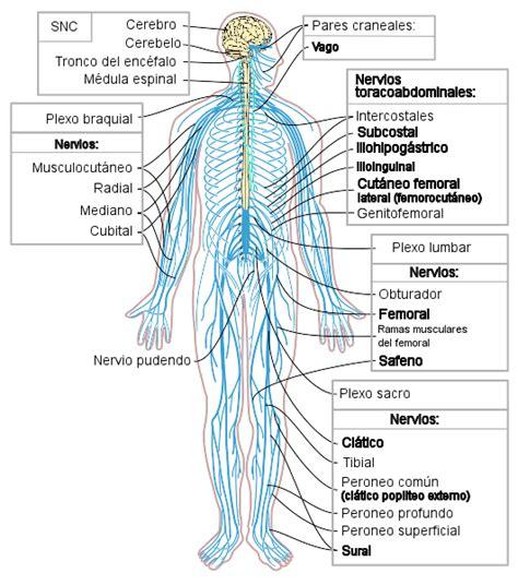 Sistema Nervioso on emaze