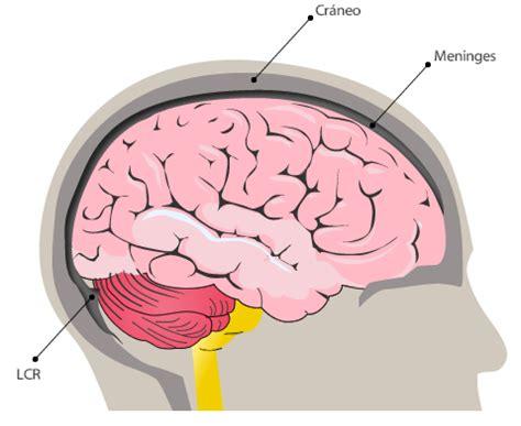 Sistema nervioso: organización y función