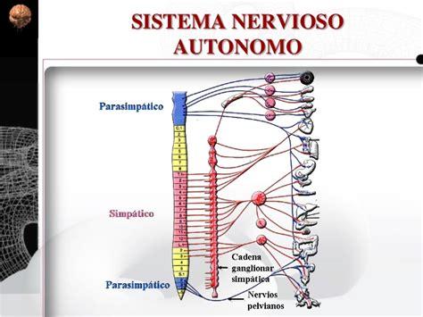 Sistema Nervioso Periférico, Autonomo. Histología y ...