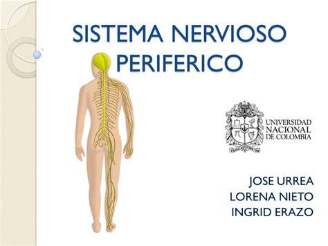 SISTEMA NERVIOSO PERIFERICO - ppt video online descargar