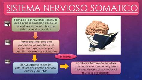 Sistema nervioso periferico somatico