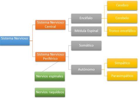 Sistema Nervioso  SN  Funciones, partes y enfermedades.