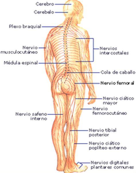 Sistema nervioso y control motriz   Corporal System
