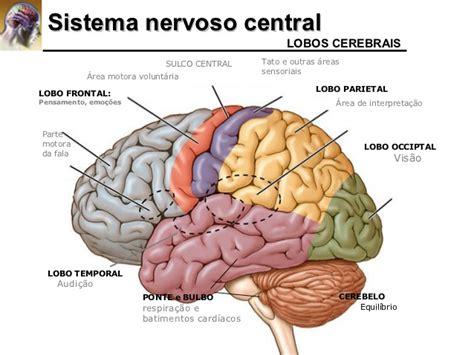Sistema Nervoso Central - Anatomia Humana