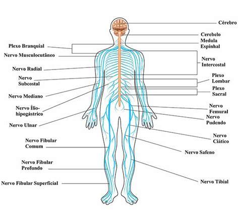 Sistema Nervoso - Toda Matéria