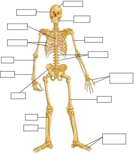 sistema oseo dibujos para imprimir el cuerpo humano